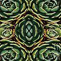 Patterns by Ben Yassa
