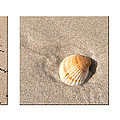 Patterns In The Sand by Carole Lloyd
