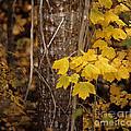 Patterns Of Fall by Sharon Elliott