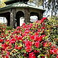 Pavilion And Azaleas  by Debra Forand
