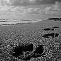Paw Prints In The Sand by Tracey McQuain