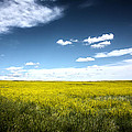 Pawnee Grasslands by Shane Bechler