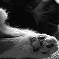 Paws Pause by Penny Parrish