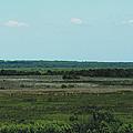 Payne's Prairie by April Wietrecki Green