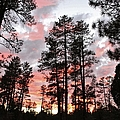Payson Pines Sunset by Michelle Cassella