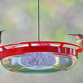 Peace At The Feeder by Lynn Bauer