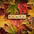 Peace-autumn by  Onyonet  Photo Studios