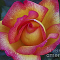 Peace In Floral Format by Kathy McClure