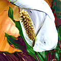 Peace Lily 2 by Dee Flouton