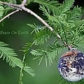 Peace On Earth by Living Color Photography Lorraine Lynch