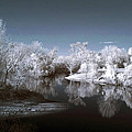 Peace River North Near Infrared Arcadia Florida Usa by Sally Rockefeller