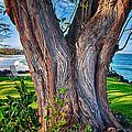 Peace Tree by Omaste Witkowski