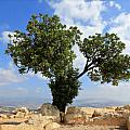 Peace Tree by Stephen Stookey