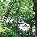 Peaceful Brook by Rosanne Bartlett