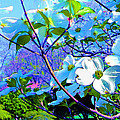 Peaceful Dogwood Spring by Susanna Katherine