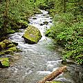 Peaceful Flowing Waters by Dan Carmichael