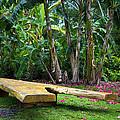 Peaceful Garden by Vanessa Valdes