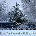 Peaceful Holiday Card - Winter Landscape by Carol Groenen