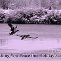 Peaceful Holidays Card - Winter Ducks by Carol Groenen