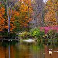 Peaceful Lake by Andrea Platt