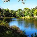 Peaceful Lake by Susan Savad