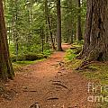Peaceful Path To Cheakamus Lake by Adam Jewell