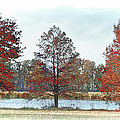 Peaceful Pond by Bonnie Willis