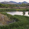 Peaceful Pond by Dana Moyer