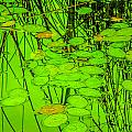 Lily Pads And Reed Reflections by Roxy Hurtubise