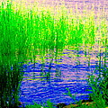 Peaceful Stream  Quebec Landscape Art Tall Grasses At The Lakeshore Waterscene Carole Spandau by Carole Spandau