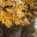 Peacefull Fall Walk by Scott Campbell
