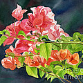 Peach Colored Bougainvillea With Dark Background by Sharon Freeman