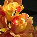 Peach Cymbidium Orchid by Alfred Ng
