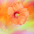 Peach Hibiscus by Angela Stanton
