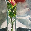 Rose In The Clear by Judith Scull