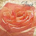 Peach Rose Thank You Card by Debbie Portwood