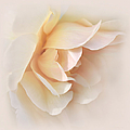 Peach Rose Tranquillity by Jennie Marie Schell