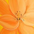 Peachy Summer by Maria Williams