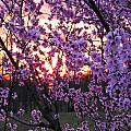 Peachy Sunset 1 by Nick Kirby