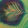 Peacock by Aliya Michelle
