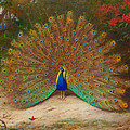 Peacock Butterfly by Archibald Thorburn