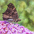 Peacock Butterfly Inachis Io On Buddleja by Liz Leyden