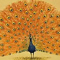 Peacock by English School