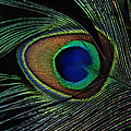 Peacock Eye by Joachim G Pinkawa