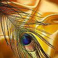 Peacock Feather by Jelena Jovanovic