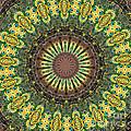 Peacock Feathers Kaleidoscope 7 by Rose Santuci-Sofranko