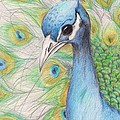 Peacock Portrait by Laurie Pike