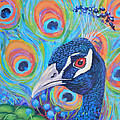 Peacock Pride by Toni Wolf