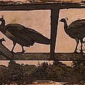 Peahens by Suzy Norris