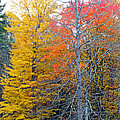 Peak And Past Foliage by Duane McCullough